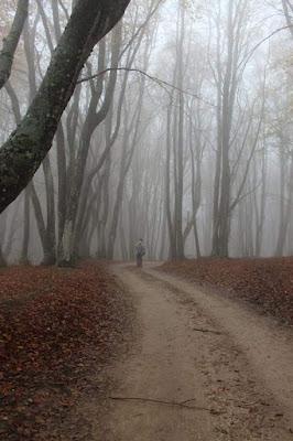Passi nella nebbia  di daniela_maranesi