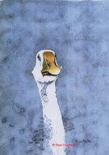 Photo: Goose
