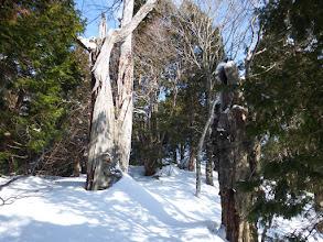 巨大な老木が見られ出す