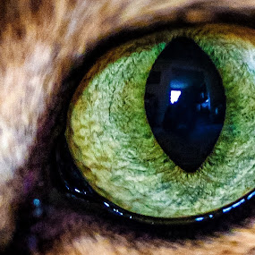 Maximus Eye II by Adam Snyder - Abstract Macro (  )