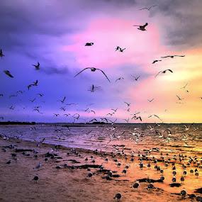 Gulls At Sunset by Terry Davey - Animals Birds ( gulls sunset )