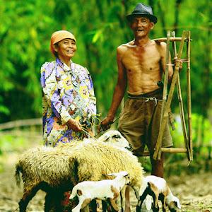 ayah ibu bawa kambing - ino 11like.jpg