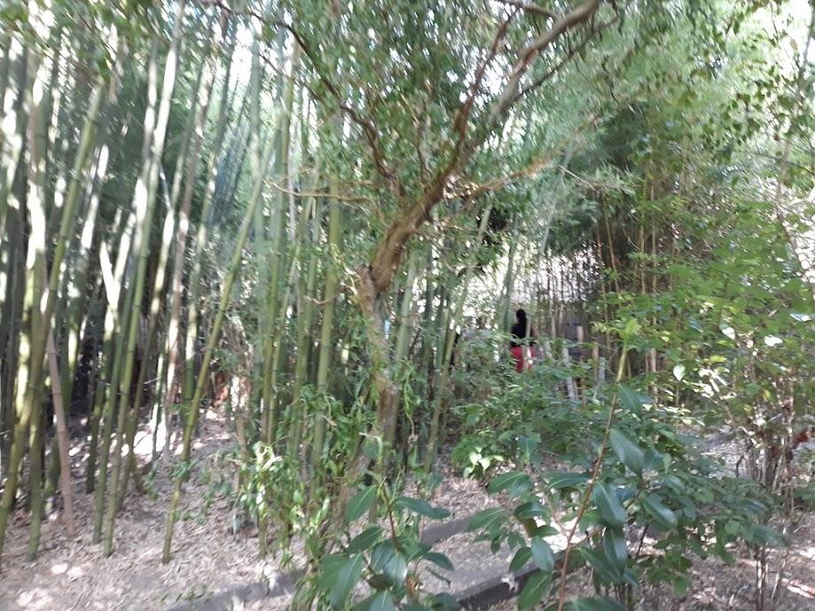 Foto Jardín botánico Fundación Sales 10