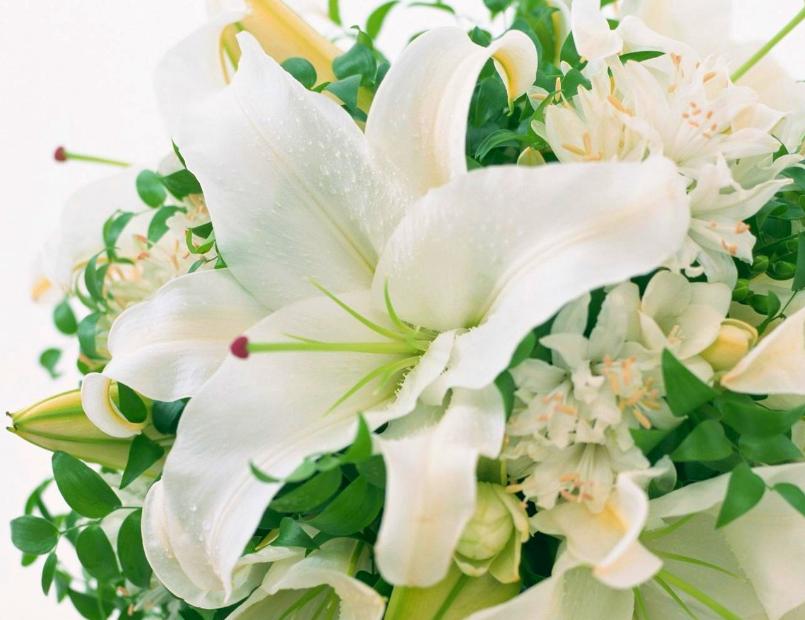 Hoa Ly trắng biểu tượng của tình yêu chung thủy