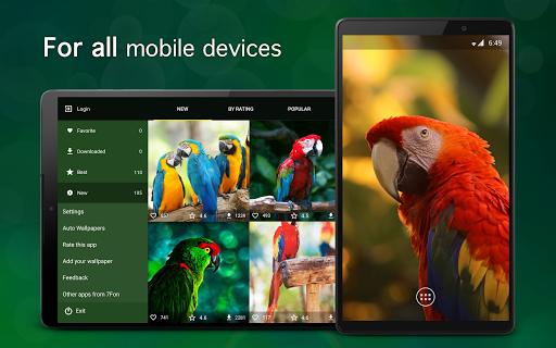 Parrot Wallpapers 4K modavailable screenshots 5
