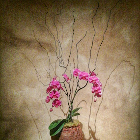 Orchid and Shadow by David Stone - Flowers Flower Arangements ( arrangement, orchid, floral, shadows, flower,  )