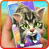 Funny cat on screen. Prank app.