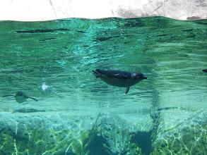 Photo: Donde puedes ver estos pingüinos