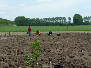 Photo: begin van de moestuin is er: aardbeien