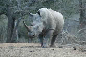 Photo: Mkhuze Game Reserve. Kumasinga Hide *****