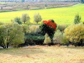 Photo: outsider  for #landscapephotography // +Landscape Photographyby +Margaret Tompkins// +Carra Riley// +Jim Warthman// +paul t beard// +Bill Wood// +David Heath Williams for #fotoamateur // +Fotoamateurby +Scotti van Palm// +Karsten Meyer// +Markus Landsmann// +Remo Primatesta #trees // #autumn // #autumnphotography // #autumnlandscape // #treetuesday
