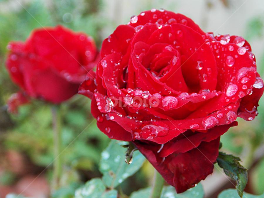 by Megha Jayaram - Nature Up Close Flowers - 2011-2013