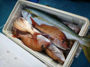 Photo: ヤマダさんの釣果。 真鯛20匹とヒラス、メダイでした!