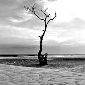 Stand Alone by Rizki Mayendra - Landscapes Beaches ( mono-tone, b&w, black and white, b and w, landscape, monotone,  )