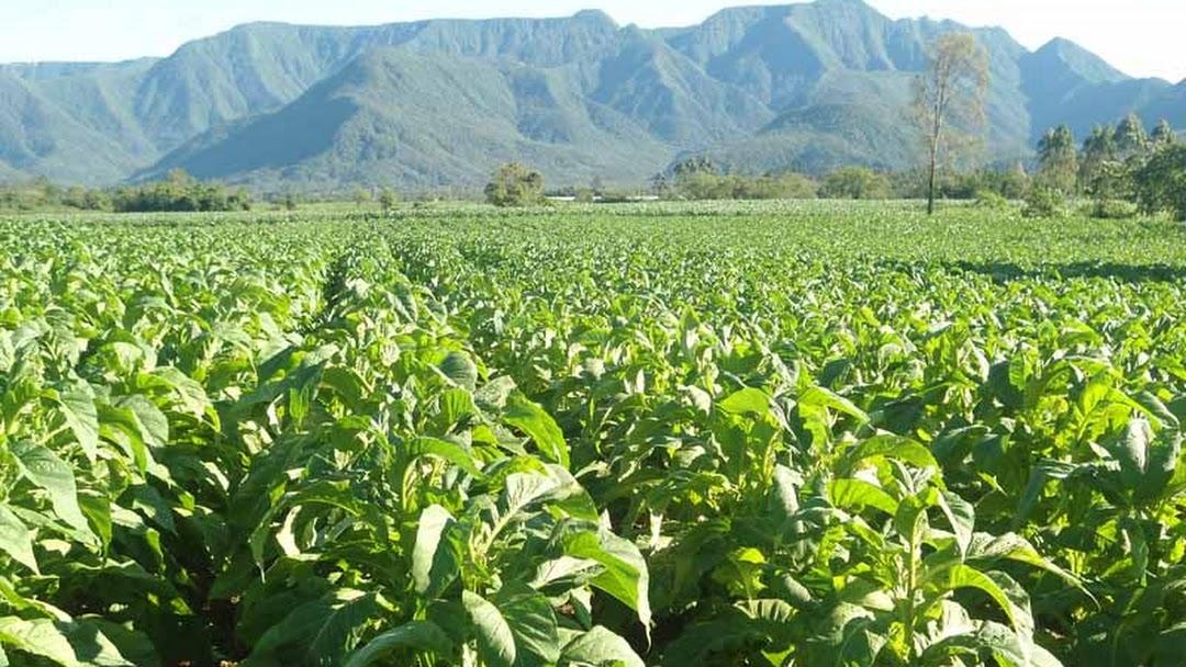 Matovanyika Farm Mhangura - Chamber Of Agriculture