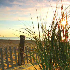 Beach Grass by Terri Schaffer - Landscapes Beaches