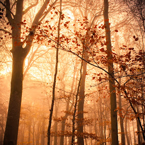 Fairy forest by Anne-Cecile Pflieger - Landscapes Forests ( annececilegraphic, tree, falling leaf, fall, trees, brown, forest, autumn colors, leaf, sunlight, leaves, light, woods,  )