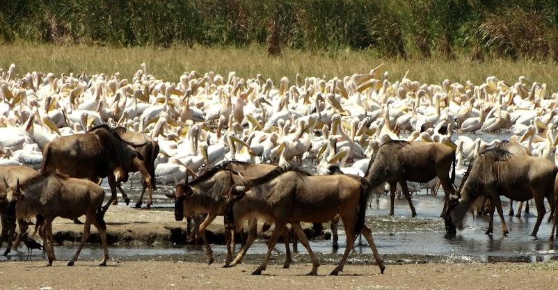 Заметки о животных. Путешествие по Кении и Танзании.