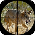Coyote Hunt.. file APK for Gaming PC/PS3/PS4 Smart TV