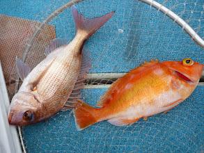 Photo: 真鯛とアカイサキのダブル!