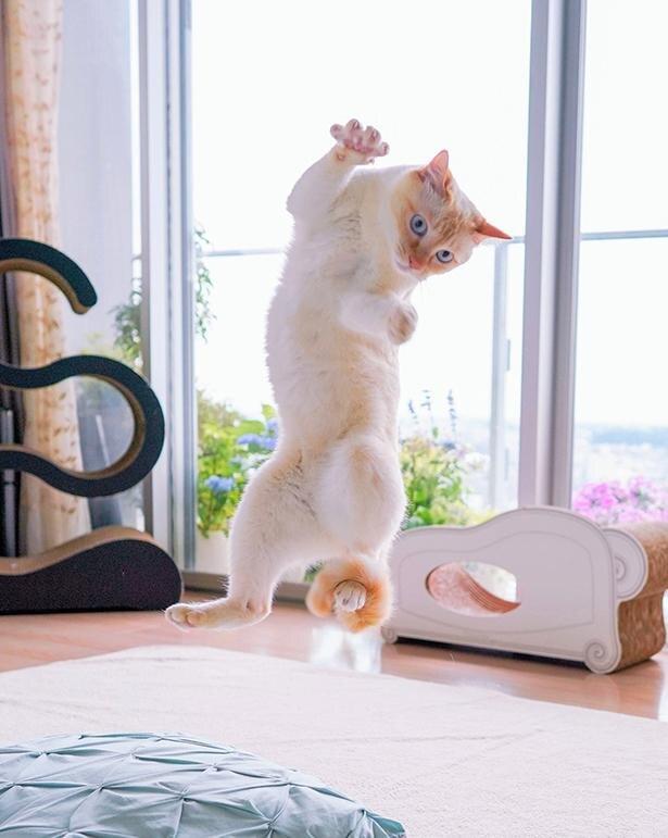 """「本當に貓ですか…?」無重力ショットからカップル自撮りまで!10萬いいねを集める""""忍者貓""""が話題 ..."""