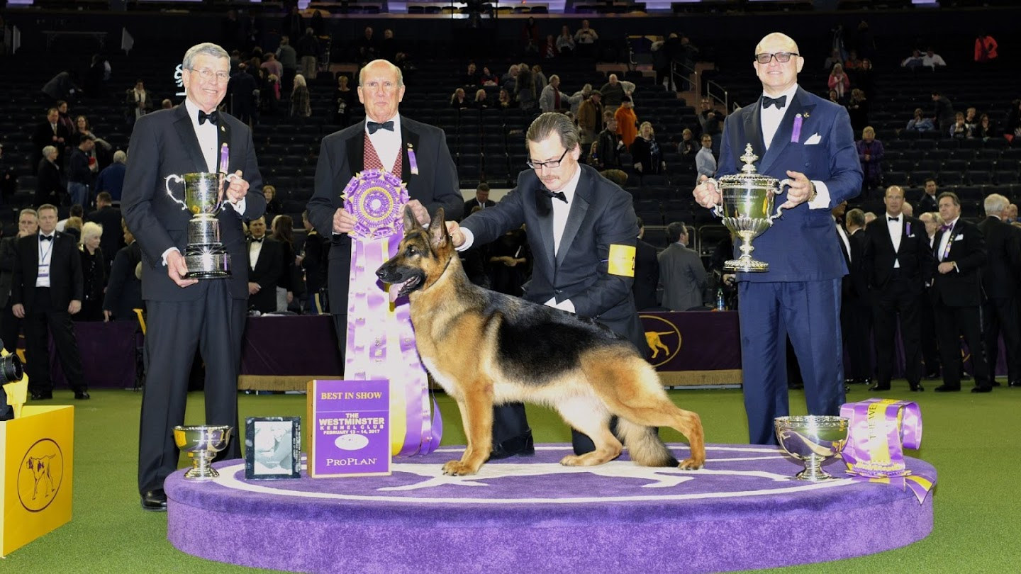 Watch 142nd Westminster Kennel Club Dog Show live