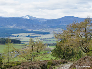 Photo: Mount Battock and Peter Hill from Scolty