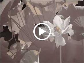 Video: Antonio Vivaldi  Concerto for 2 trumpets, strings   b.c. in C major (RV 537)   The English Concert -