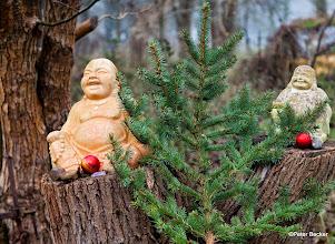 Photo: Weihnachtsdeko auf Hagens Insel in Burg