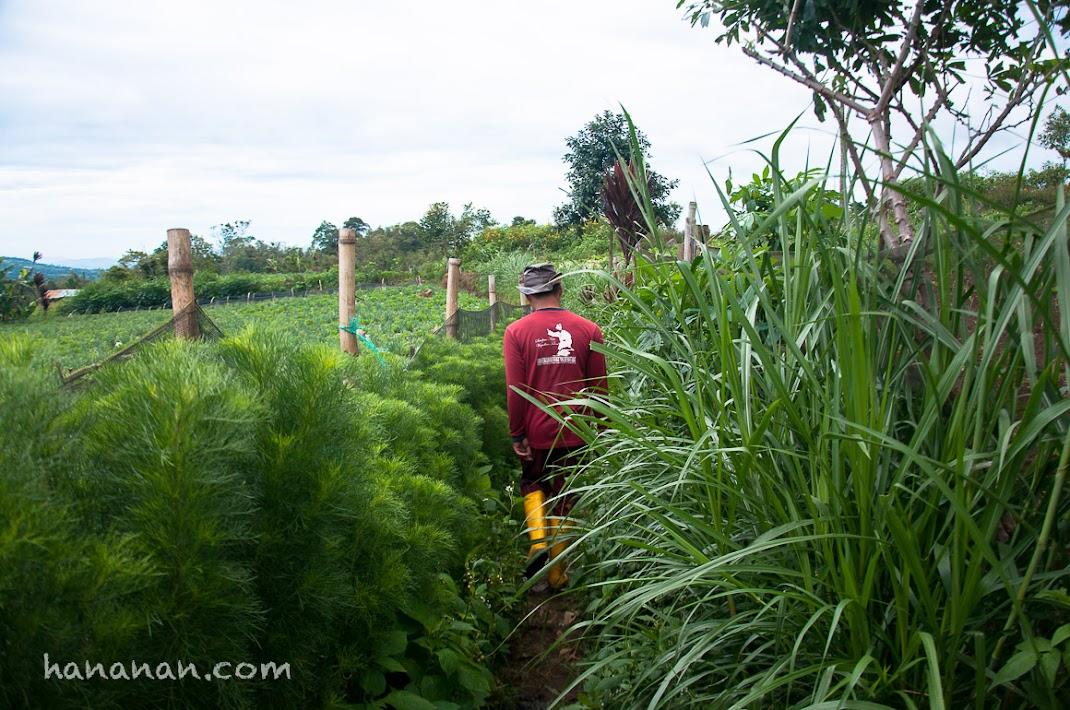 Jalan-jalan ke kebun sawi, brokoli, dan bawang.