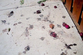 Photo: Plums and black dust form a pulpy mess on a sidewalk in Santa Barbara, CA. Sept. 2012.