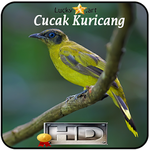 Cucak Kuricang Top - náhled