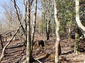 右の植林との境を進む