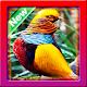 Wallpaper Birds Download for PC Windows 10/8/7