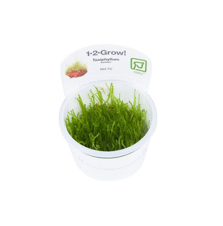 Taxiphyllum barbieri 1-2-Grow Tropica