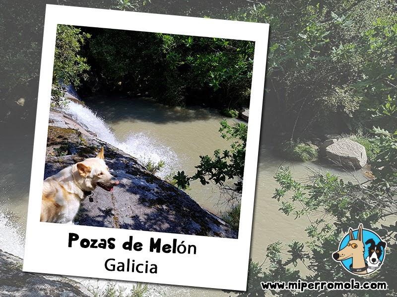 5 Rutas con Perro para Disfrutar del Senderismo Pozas de Melón