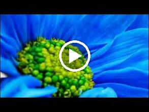 Video: A. Vivaldi  Dorilla in Tempe (RV 709-D) - I I Aria [Elmiro]  Mi lunsinga il dolce affetto   E. Elwes -