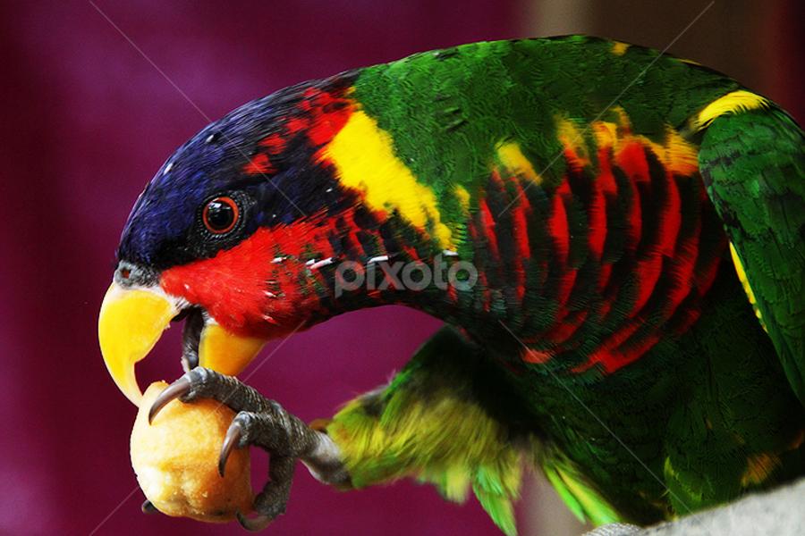 delicious by 'Andi Iqbal - Animals Birds