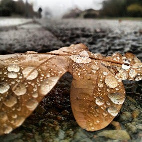 Rainy day by Julija Moroza Broberg - Nature Up Close Leaves & Grasses ( fall leaves on ground, fall leaves )