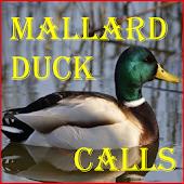 Mallard Duck Calls