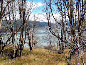 Photo: Lago Grey through the burnt trees