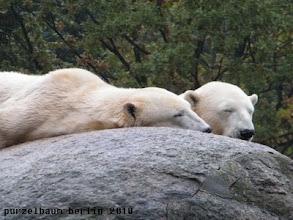 Photo: Tosca und Nancy ruhen noch ;-)
