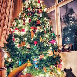 Christmas tree by Aurelio Firmo - Public Holidays Christmas ( christmas tree, tree,  )