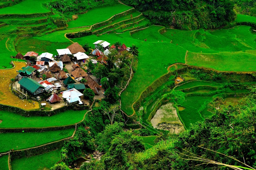Native Ifugao Village by Wilbert Quebral - City,  Street & Park  Vistas ( houses, native, green, lush )