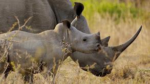 Wild Swaziland thumbnail