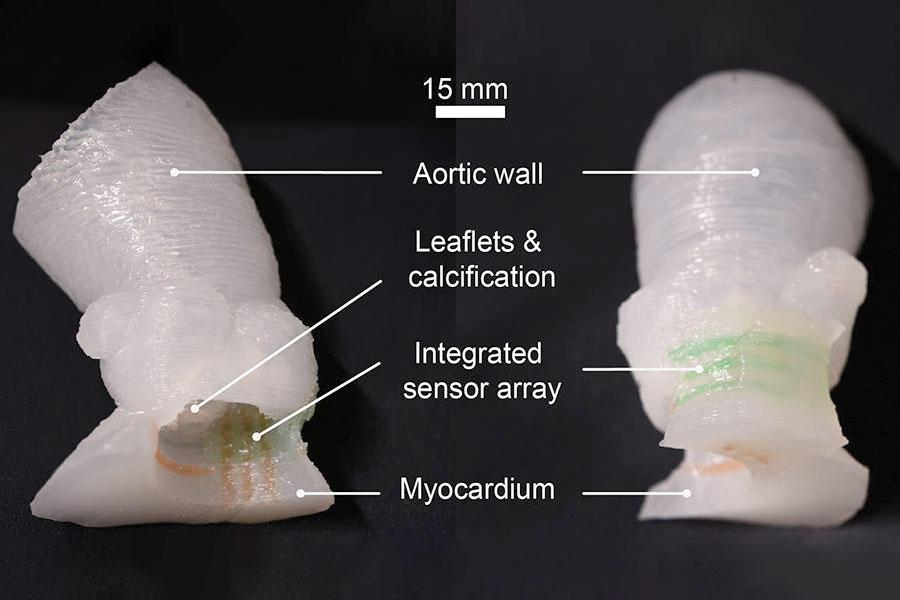 Modelo 3D de válvula aórtica
