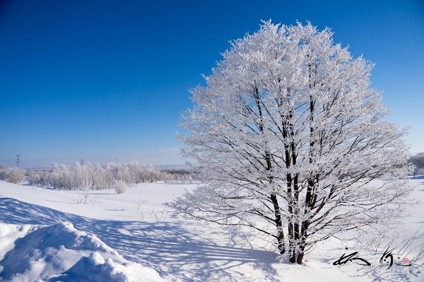 樹氷が朝陽に輝いた瞬間