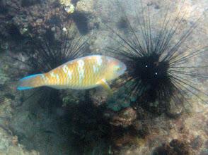 Photo: Parrotfish
