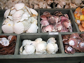 Photo: Seashells at a Mallory Square shop