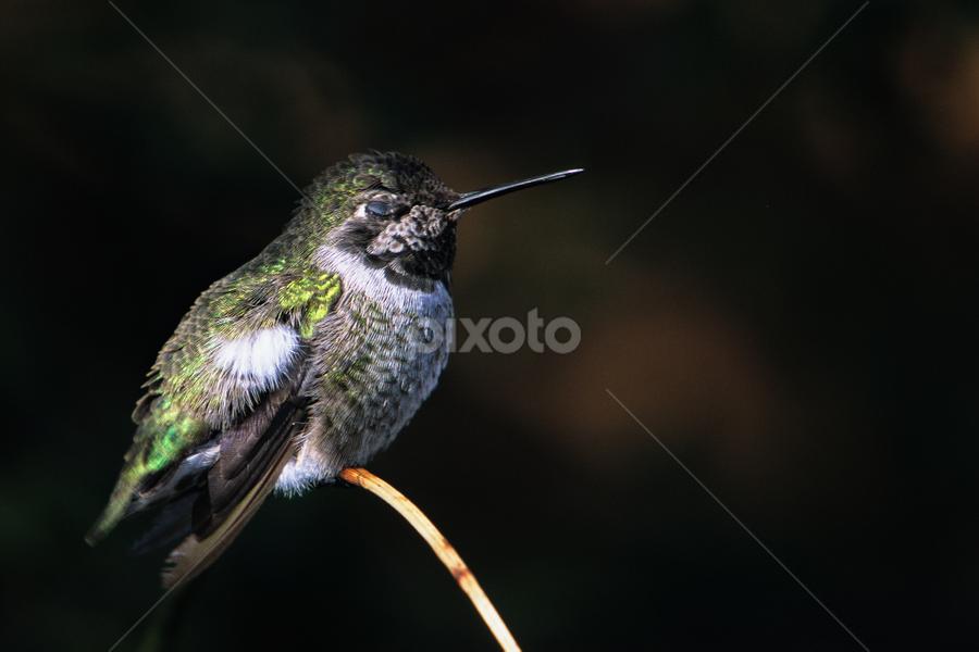by Brent Bristol Sr. - Animals Birds